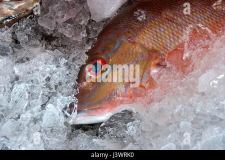red snapper fish offered in a big fresh market in Sao Paolo, Brazil - Stock Photo