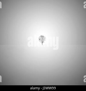 Minimalist fine art black and white photo with a lone tree in the snow. - Stock Photo