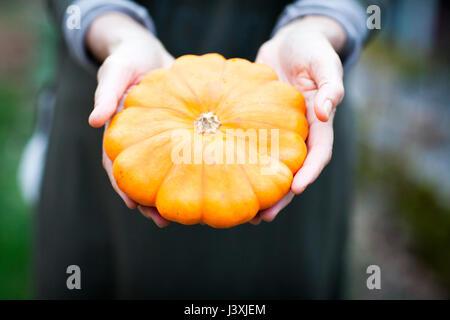 Hands of female gardener holding orange squash vegetable - Stock Photo