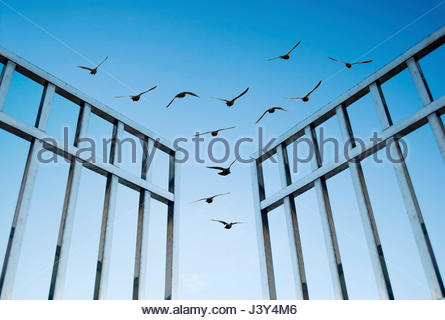 birds fly over the open gate, concept of success and freedom - Stock Photo