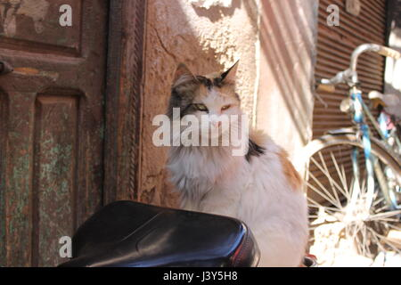 Cat on bike seat Marrakech, Morocco - Stock Photo