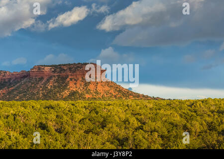 Mesa and pinyon-juniper forest in Bears Ears National Monument, southern Utah, USA - Stock Photo