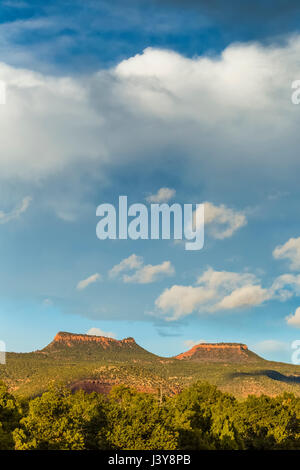 Bears Ears Buttes and the surrounding pinyon-juniper forest in Bears Ears National Monument, viewed from within - Stock Photo