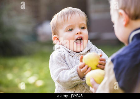 two toddler boys playing with apples in the garden - Stock Photo