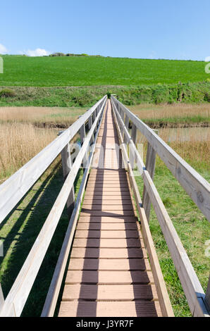 Footbridge passing over reeds growing in a nature reserve at South Milton Sands near Thurlestone in Devon - Stock Photo