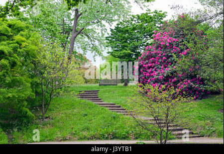 Stone stairs leading to a wooden bench surrounded by tall trees and pink rhododendron in bloom, in an english garden, - Stock Photo