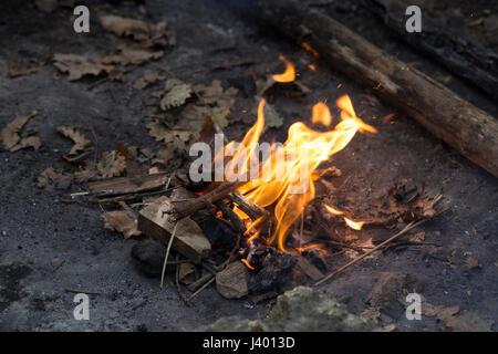 oak wood fire in a forest - Stock Photo