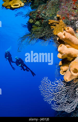 SCUBA divers around a beautiful coral wall - Stock Photo