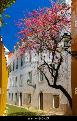 Spring typical Lisbon street, Portugal - Stock Photo