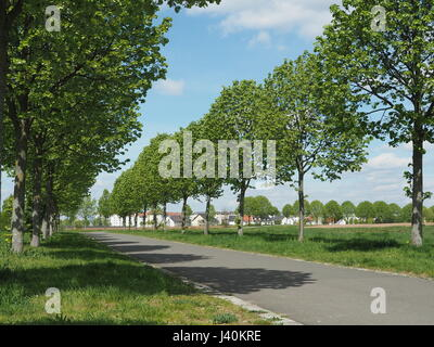 Tree lined streed in a park, allee - Stock Photo
