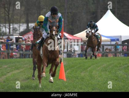 Spring Steeplechase in Aiken, SC - Stock Photo