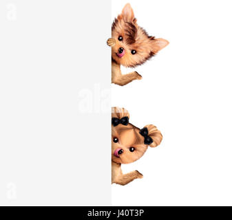Funny couple of puppies holding empty banner, isolated on white. Community and friendship concept. Realistic 3D - Stock Photo