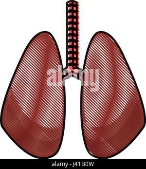 drawing lung human organ healthy design - Stock Photo