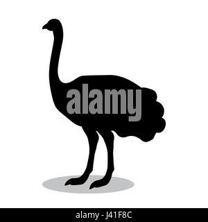 Ostrich bird  black silhouette animal - Stock Photo