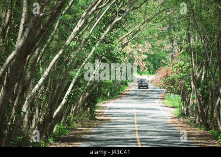 Close focus on countryside road covered by green tree inside tropical forest called Tree tunnel with blurry running car on distant.
