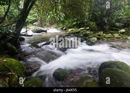 Fast flowing freshwater creek in tropical Rainforest, Bellenden Ker, Far North Queensland, QLD, FNQ,  Australia