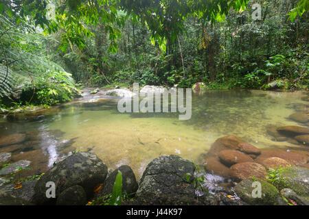 Swimming hole in a freshwater creek in tropical Rainforest, Bellenden Ker, Far North Queensland, QLD, FNQ,  Australia