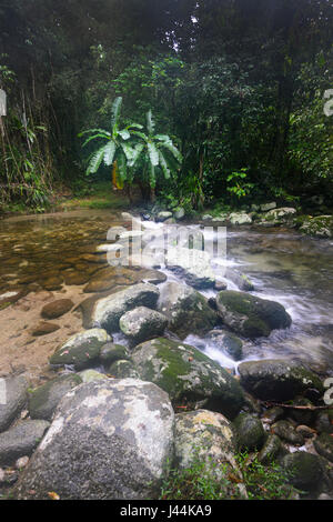 Freshwater creek in tropical Rainforest, Bellenden Ker, Far North Queensland, QLD, FNQ,  Australia - Stock Photo