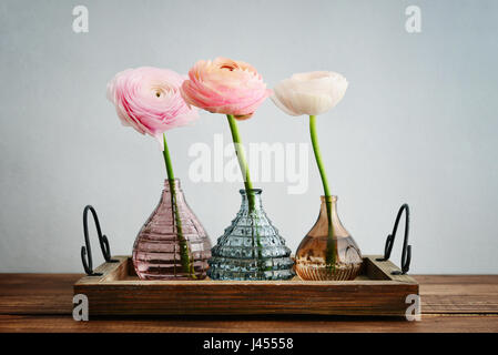 Persian buttercup flowers (ranunculus)  in vases on blue background - Stock Photo