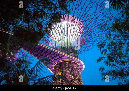 Supertree grove at night in Gardens by the Bay, Singapore - Stock Photo