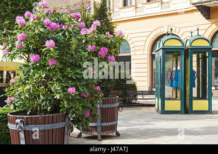 Flowers and telephone booth on the city street - Stock Photo