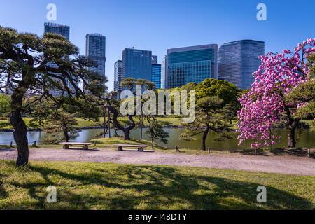 Hamarikyu Gardens in Tokyo - Stock Photo