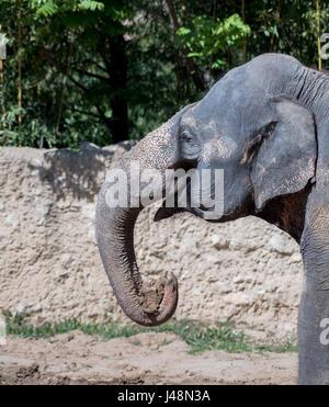 elefanterne i zoo