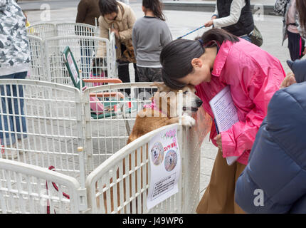 Nagasaki, Japan - March 26th, 2017: A japanese woman is offering a dog for adoption on a square in Nagasaki City. - Stock Photo