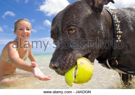 Teenage girl getting a tennis ball from the mouth of a large dark brown dog that she is playing fetch with on Mokuleia - Stock Photo