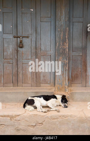 Black and white dog sleeping on the porch of a house in Bhaktapur, Nepal. - Stock Photo