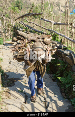 Older Nepalese man carrying a bundle of wood up a stone staircase in Landruk, Annapurna region, Nepal. - Stock Photo