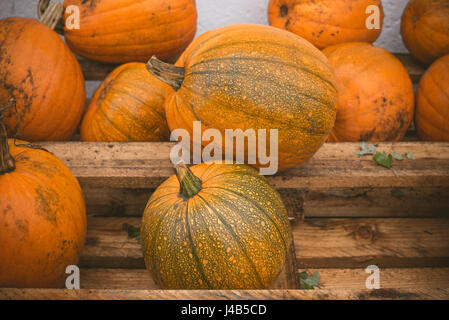 Orange pumpkins stacked on a wooden shelf at a festival - Stock Photo