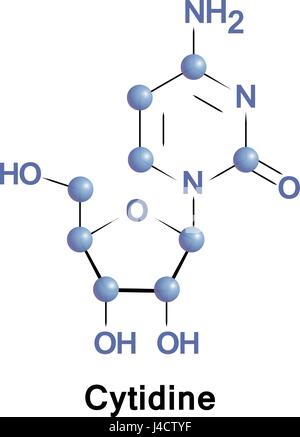 Cytidine is a nucleoside molecule that is formed when cytosine is attached to a ribofuranose N1-glycosidic bond. - Stock Photo