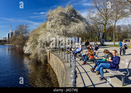 In the Inner Alster in Hamburg, Germany, Europe, An der Binnenalster in Hamburg, Deutschland, Europa - Stock Photo