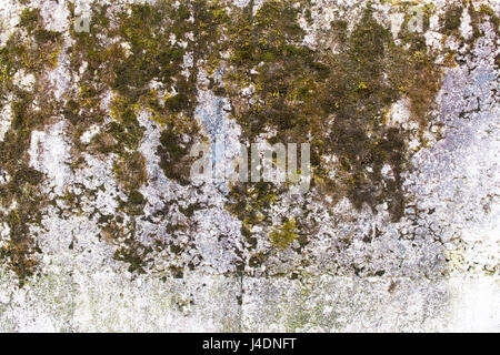 Fragment of a concrete wall with moss growing on it. - Stock Photo