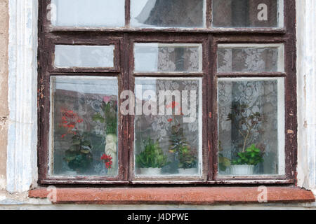 Old wooden brown window on the white facade of the house, outside the window, and vintage lace curtains on the window - Stock Photo