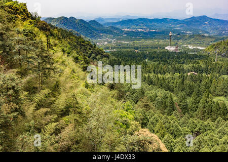 Aerial view of forest of green pine trees on mountainside - Stock Photo