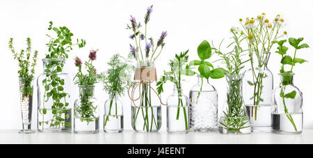Bottle of essential oil with herbs on white background - Stock Photo