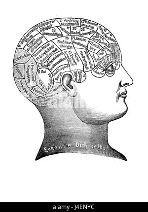 Alternative and pseudo-medicine: phrenology cart  about the brain localization of mental functions, vintage engraving - Stock Photo