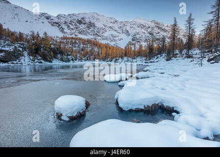 Red larches frame the frozen Lake Mufule, Malenco Valley, Province of Sondrio, Valtellina, Lombardy, Italy, Europe - Stock Photo