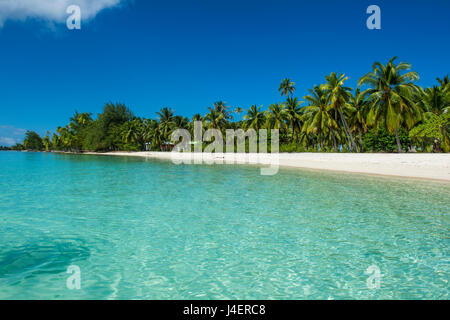 Beautiful palm fringed white sand beach in the turquoise waters of Tikehau, Tuamotus, French Polynesia, Pacific - Stock Photo