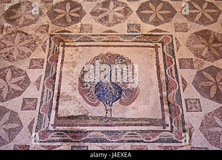 The 'Peacock' mosaic Inside the 'House of Dionysus'  in the Archaeoological Park of Paphos (UNESCO World Heritage - Stock Photo