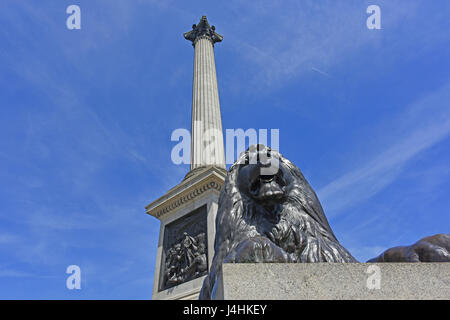 Lion and Nelson's Column in Trafalgar Square London - Stock Photo