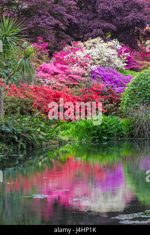 Stunning rhododendrons and azaleas reflected in pond at Exbury Gardens, New Forest National Park, Hampshire in May - Stock Photo