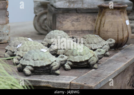 Slow and steady wins the race with this group of turtles. - Stock Photo