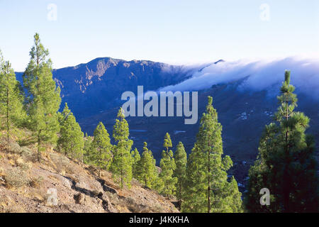 Spain, island grain Canaria, Roque Nublo, inclination, trees, mountains Europe, Südwesteuropa, Iberian peninsula, - Stock Photo