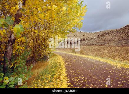 Side road and autumn landscape. Mesa valley,  Guadalajara province, Castilla La Mancha, Spain. - Stock Photo