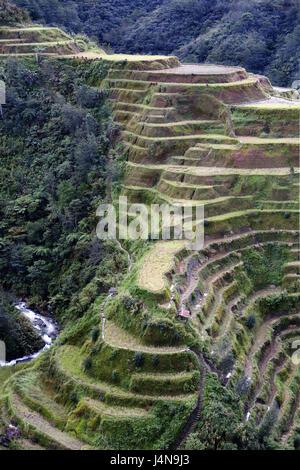 The Philippines, island Luzon, Cordillera, meadow Ban District, Batad, travel terraces, Asia, South-East Asia, mountains, - Stock Photo