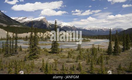 River scenery, dry season, woods, mountain scenery, width, Canada, province, Alberta, Banff Nationwide park, Rocky - Stock Photo