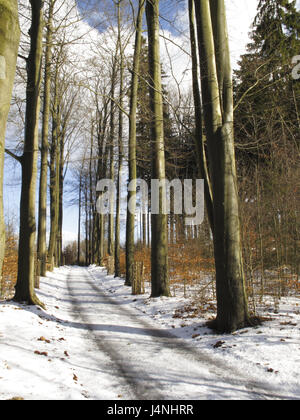Forest way, trees, bald, snow, winter, nature, season, wintry, lanes, way, country road, forest road, wood, trees, - Stock Photo